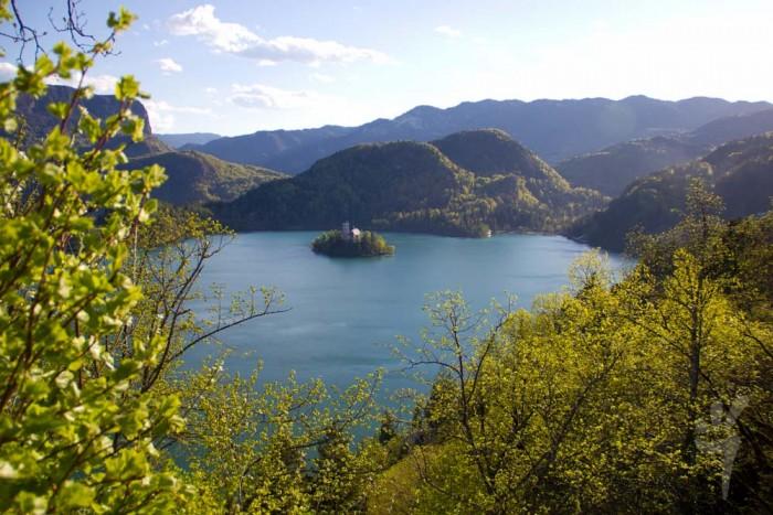 Озеро, окружённое лесом в Словении
