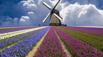 Как найти работу в Нидерландах