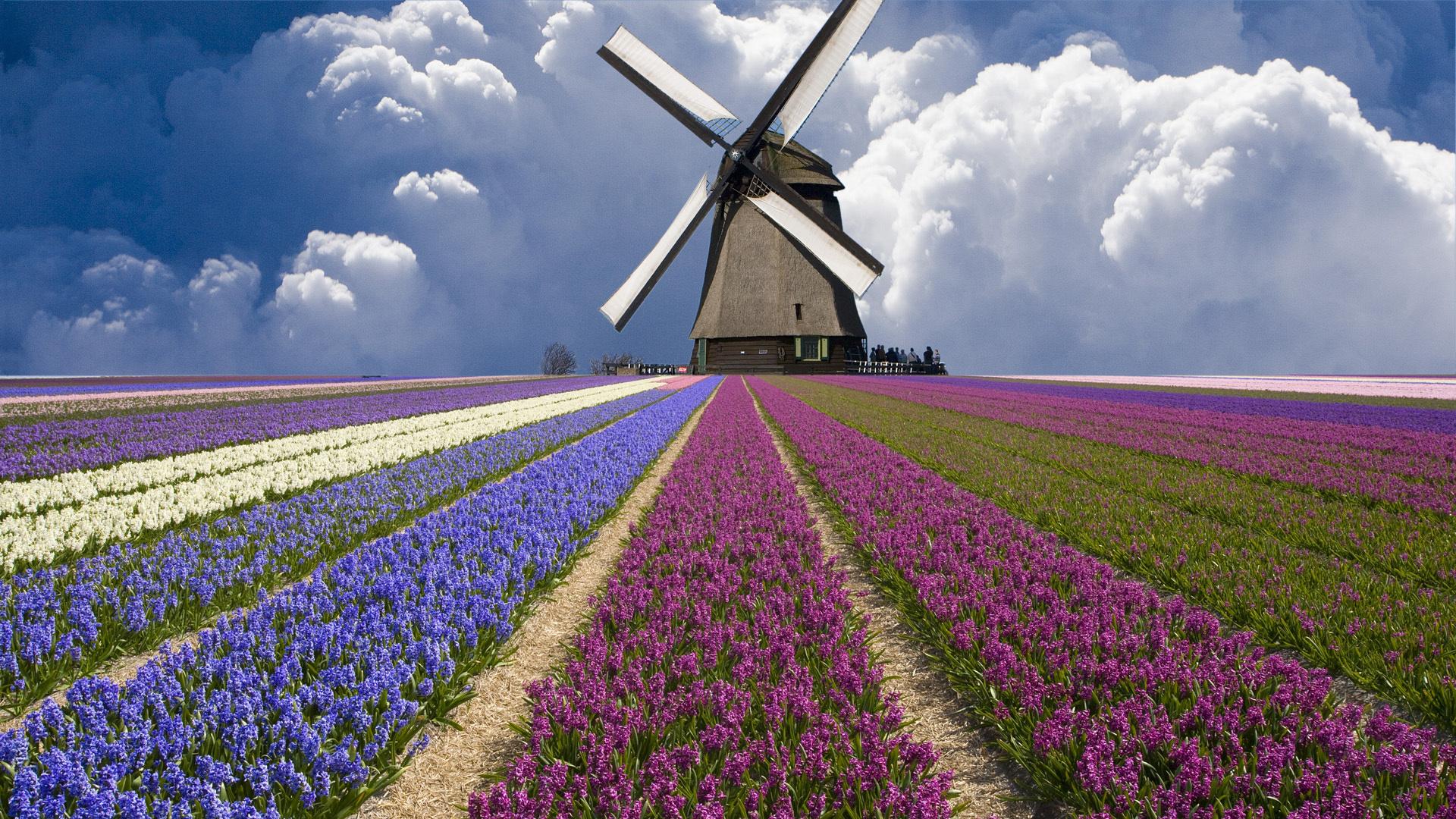 Вакансии в нидерландах цены на жилье в риме