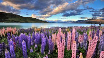 Как устроиться на работу в Новой Зеландии гражданам России и стран СНГ?