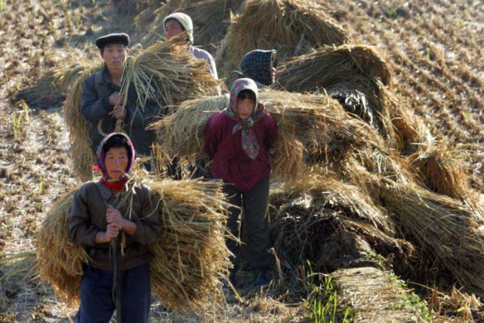 Нелегальные работники в Корее