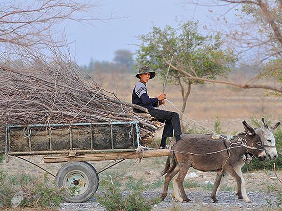 Гужевой транспорт по-прежнему используется в казахском селе