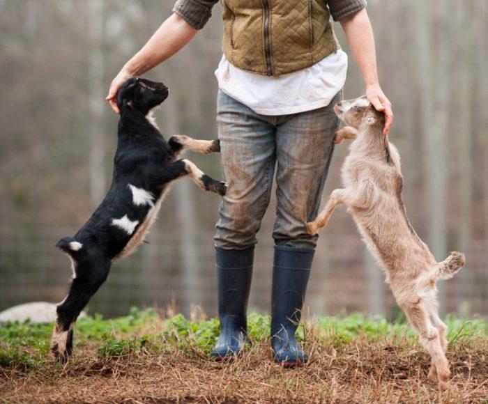 Фермер с козлятами