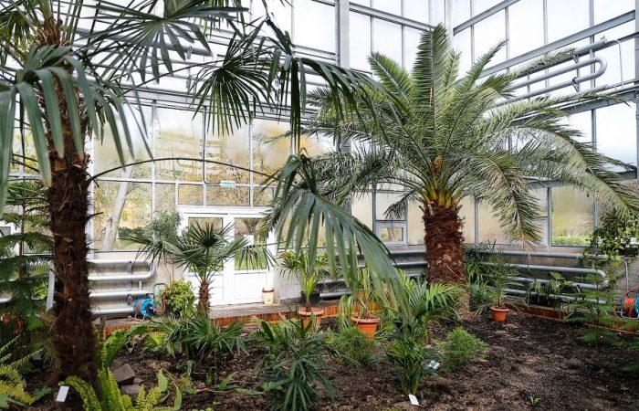 Калининградский ботанический сад