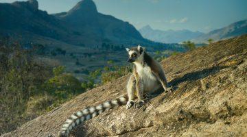 Удивительный Мадагаскар: 5 уникальных достопримечательностей острова