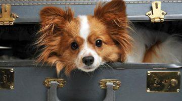 Как спокойно и без лишних нервов перевезти собаку в поезде
