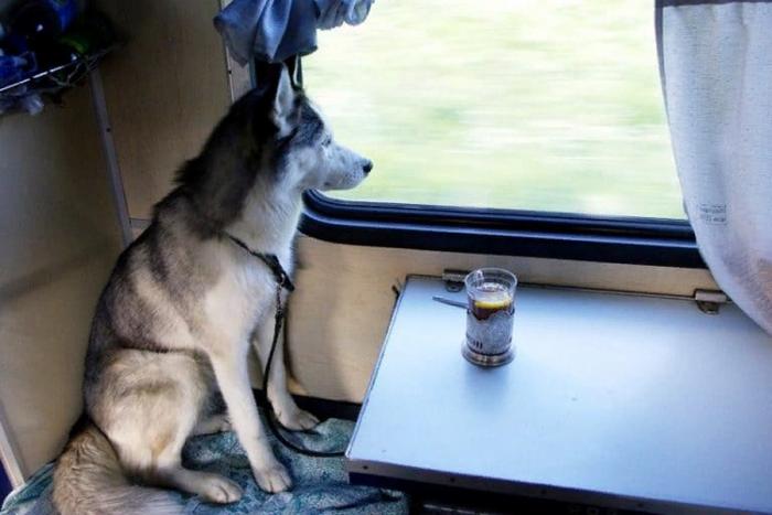 Хаски в поезде
