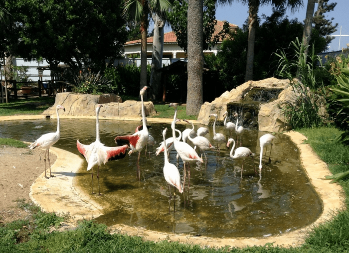 Зоопарк Лимасола