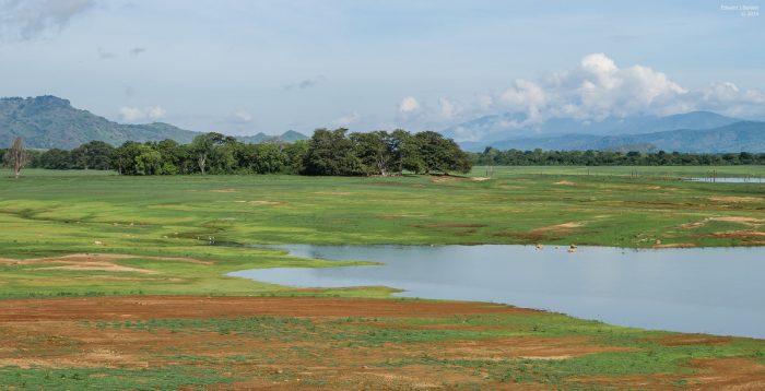 Парк Удавалаве на Шри-Ланке
