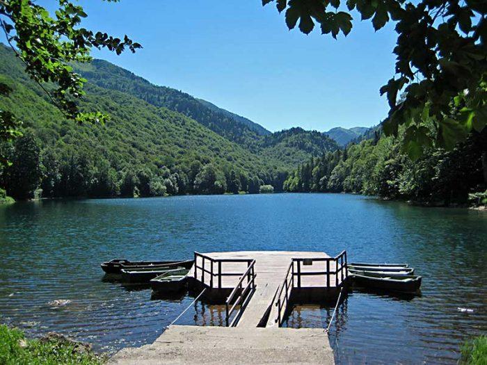 Парк Биоградска гора