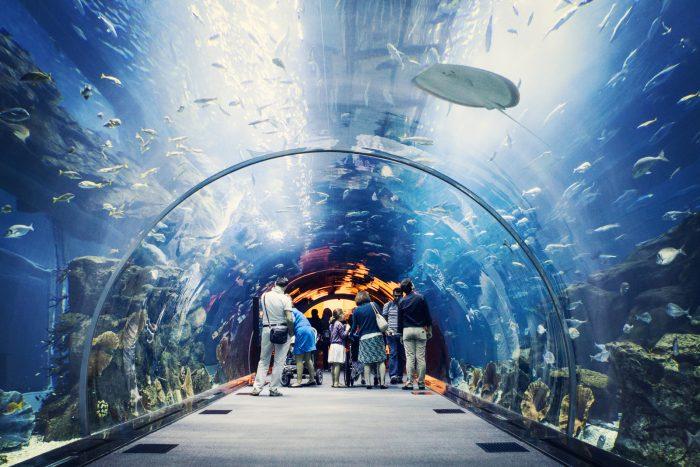 Акванариум в Дубае