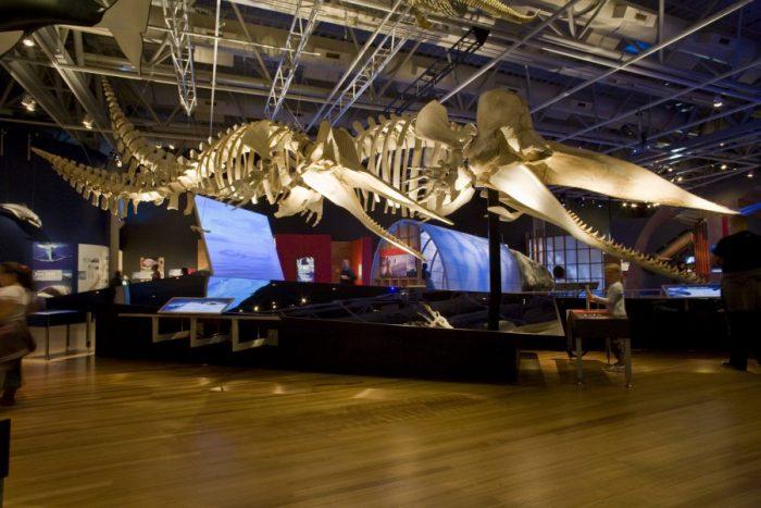 Национальный музей Новой Зеландии