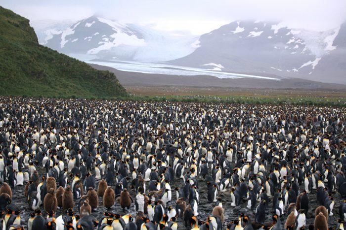Пингвин Плейс