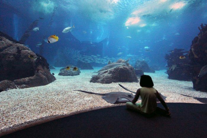 Океанариум в Лиссабоне
