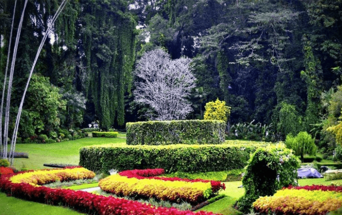 Королевский ботанический сад в пригороде Канди Перадении на Шри-Ланке