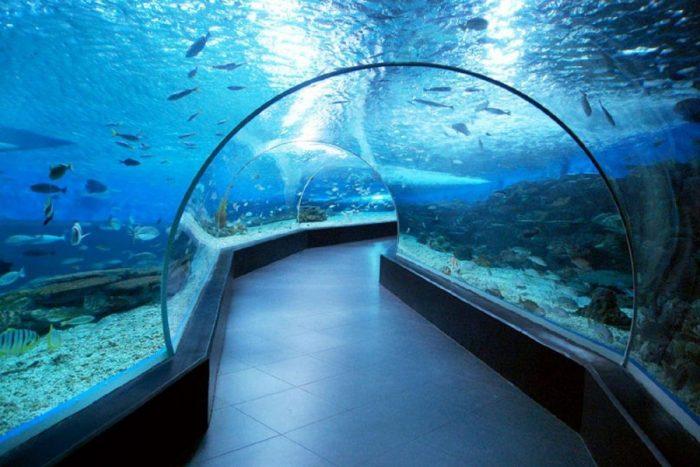 Внутри океанариума города Манила