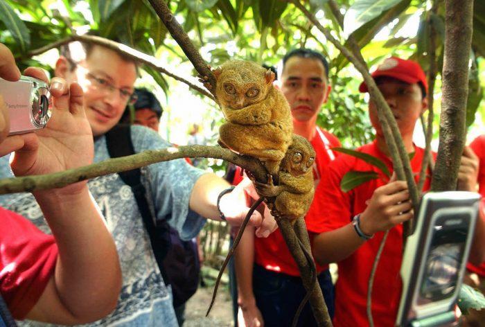 Два долгопята, сидящие на ветке дерева и окружённые туристами