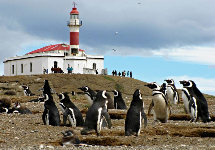 Пингвины возле своих нор на острове Магдалена