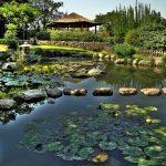 Пруд с кувшинками в японском саду