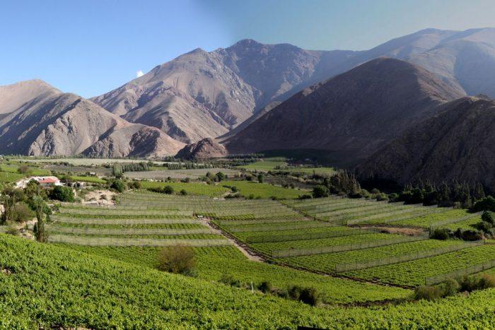 Виноградники на фоне гор