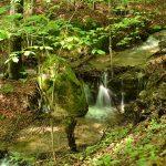 Небольшой ручей течёт в лесу