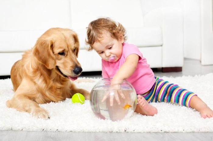 играть с собакой в квартире